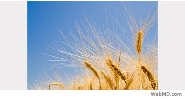 nov-27-grains