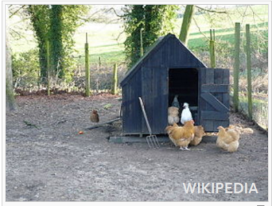 nov-7-chicken-coop-1